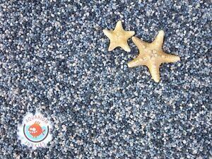 Aquarium-JunKies-Pazifik-1-8-3-5-mm