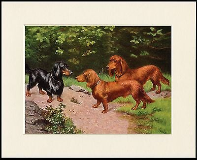DACHSHUND THREE DOGS LONG HAIRED DOGS LOVELY DOG PRINT MOUNTED READY TO FRAME