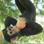 Rope swinging climbing Monkey garden ornament decoration chimp or ape lover gift