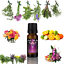 Essential-Oils-Pure-10ml-Natural-Oil-Grade-Therapeutic-Aromatherapy-Fragrances Indexbild 2