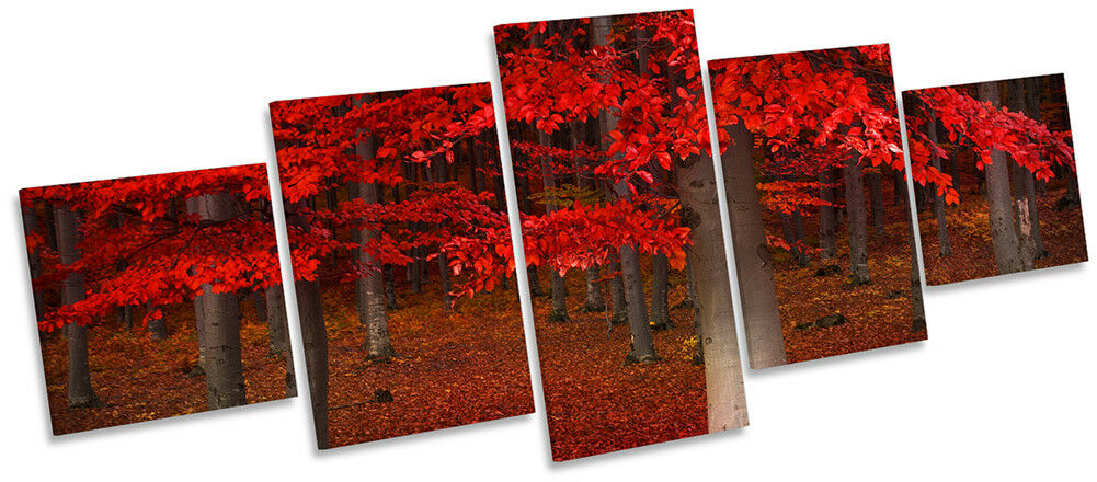 rot Forest Landscape Picture CANVAS WALL ART Five Panel