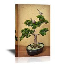 wall26 - Bonsai Canvas Wall Art - Bonsai with Miniature Pine Tree - 16x24 inches