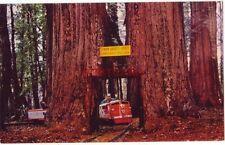 "Giant Sequoia ""TWIN DRIVE-THRU TREE"" in the heart of CALIFORNIA COASTAL REDWOODS"