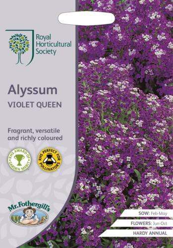 1500 Semi MR fothergills-Fiore-RHS Alyssum Violet Queen