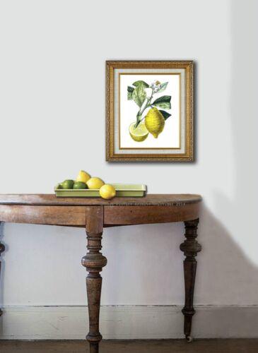 Botanical Art SET OF 9 Unframed LEMON ORANGE Fruit Wall Art LIVING ROOM Decor