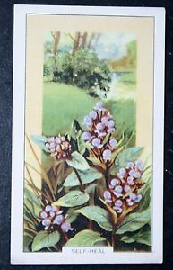 SelfHeal    Vintage Colour Card    VGC - <span itemprop=availableAtOrFrom>Melbourne, Derbyshire, United Kingdom</span> - Returns accepted Most purchases from business sellers are protected by the Consumer Contract Regulations 2013 which give you the right to cancel the purchase within 14 days  - Melbourne, Derbyshire, United Kingdom