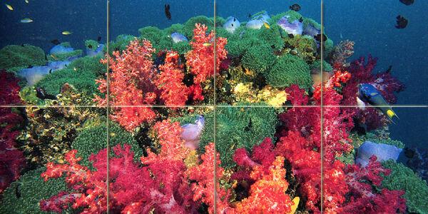 24 x 12 Art Farbeful Ocean Underwater Coral Mural Mural Mural Ceramic Bath Tile  289 ad932c