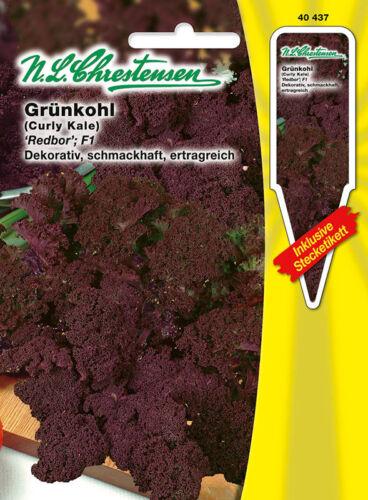 Grünkohl /'Redbor/' F1 dunkelrot schmackhaft ertragreich  Samen 40437