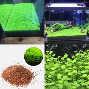 Lots Aquarium Plants Seeds Aquatic Double Leaf Carpet Water Grass for Fish Tank