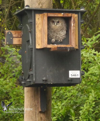 Tawny Owl Nest Box /'ECO/' Direct from the Barn Owl Centre