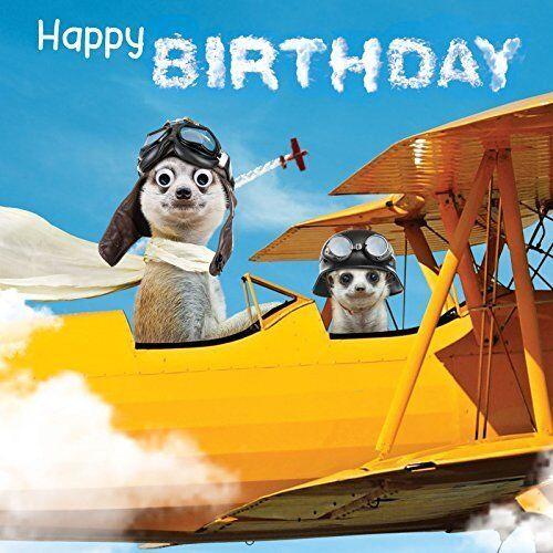 Carte d/'anniversaire Meerkats en avion Drôle Mignon Animal goggly 3D yeux mobiles