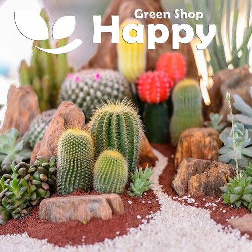 Mix of cactus seeds 0.3 grams Succulent exotic drought tolerant CACTI MIX