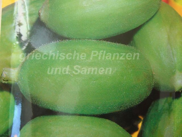 Gurke Carosello Barese *** Melonen-Gurke *** 6 Samen