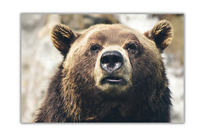 Gizzly-Bear-Poster-Wall-Prints-Premium-Gloss-Pictures-Modern-Art-Decoration