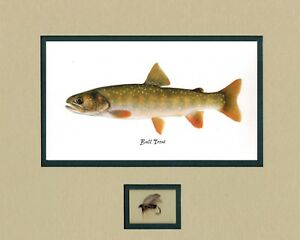 Details about 5 NEVADA Native Trout Print by Joseph Tomelleri with fly