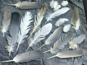 Free-Fallen-veritable-plumes-X-20-Medium-Seagull-Pie-bavarde-pigeon-Royaume-Uni-libre-p-amp-p