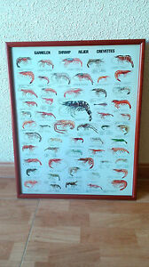 Canvas-Nautica-Classes-Of-Prawns-Or-Camaron-Pesca-Decoracion-marisco