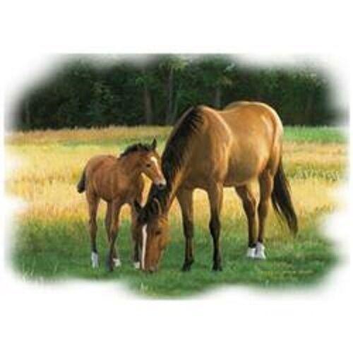 Summer Evening Horses  Sweatshirt    Sizes//Colors