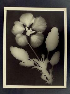 Photo-Francois-Kollar-Photogramme-de-Fleur-Tirage-Marc-Bruhat-1989