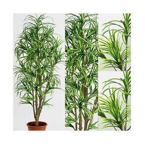 Dracena yucca 200 cm pianta artificiale finta piante for Piante finte da arredo