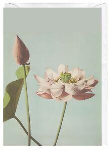 Japanese Art Greeting Card Ogawa Kazumasa Lotus Flowers Blank Inside c.1887