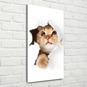 Wandbild-Kunst-Druck-auf-Hart-Glas-hochkant-70x140-Katze