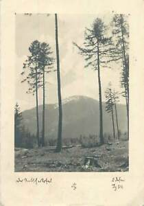 cleared-forest-Postcard