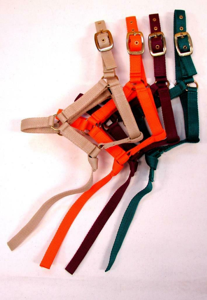 Nylon PP Economy Halter Foal SOLID Double ply w 13  catch Closeout   4 colors
