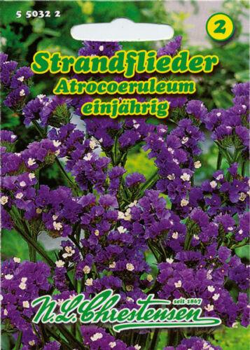 550322 Nlc 2 Flor Strandflieder,Atrocoeruleum,Semillas,Limonium Sinuatum