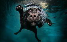 FUNNY UNDERWATER DOG - QUALITY MOUSE MAT / PAD