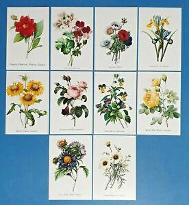 Set of 10 NEW Flowers Postcards (set 1) for Postcrossing & Postcardsofkindness