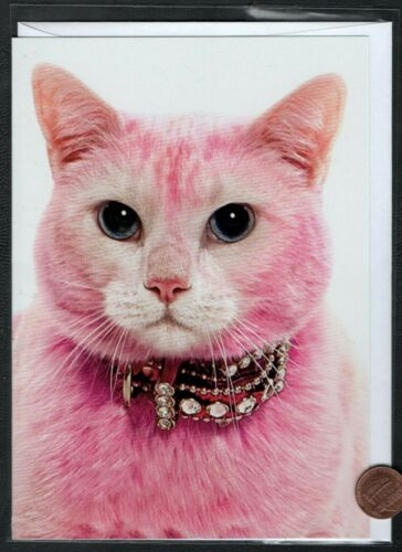 PINK Cat Kitten Collar With Jewels Posing Large Blank Greeting Note Card