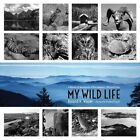 My Wild Life: A Memoir of Adventures Within America's National Parks by Roland H. Wauer (Paperback, 2014)