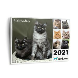 2021-Cat-Calendar-Ten-Lives-Cat-Centre-Fundraising-Calendar