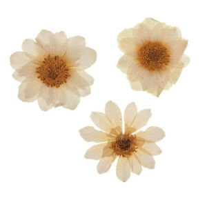 10Pcs-Pressed-Dried-Real-Ice-Flowers-for-DIY-Scrapbooking-Art-Crafts
