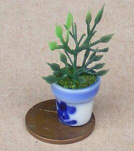 Capable Échelle 1:12 En Plastique Plante Verte Dans Un Bleu & Blanc Pot Maison De Poupées Jardin Cb1s-afficher Le Titre D'origine