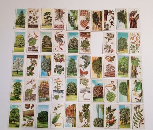 Brooke-Bond-PG-Tips-Tea-Cards-Trees-in-Britain-49-50-3-Duplicates