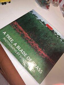 taschen art book a tree a blade of grass by shinzo maeda Photographs