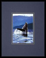 ART WOLFE HUMPBACK whale poster immagine stampa d'arte nel quadro in alluminio in nero 50x40cm