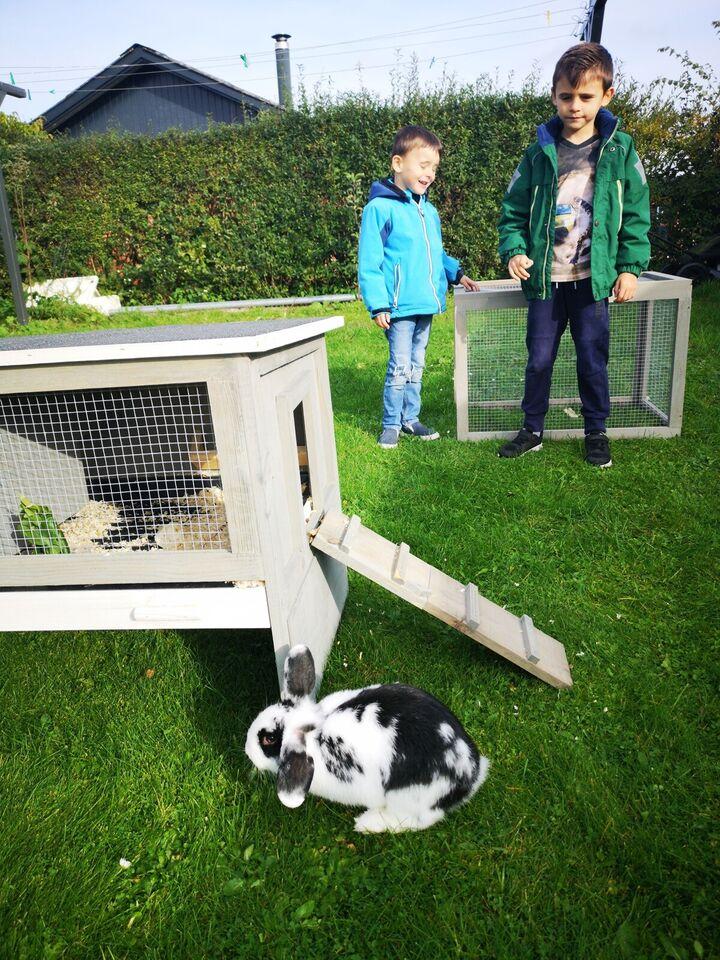 Kanin bur med kanin