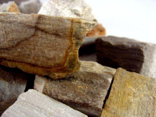 PETRIFIED WOOD Rough Rocks Perfect Sized 3 Pounds Tumbler