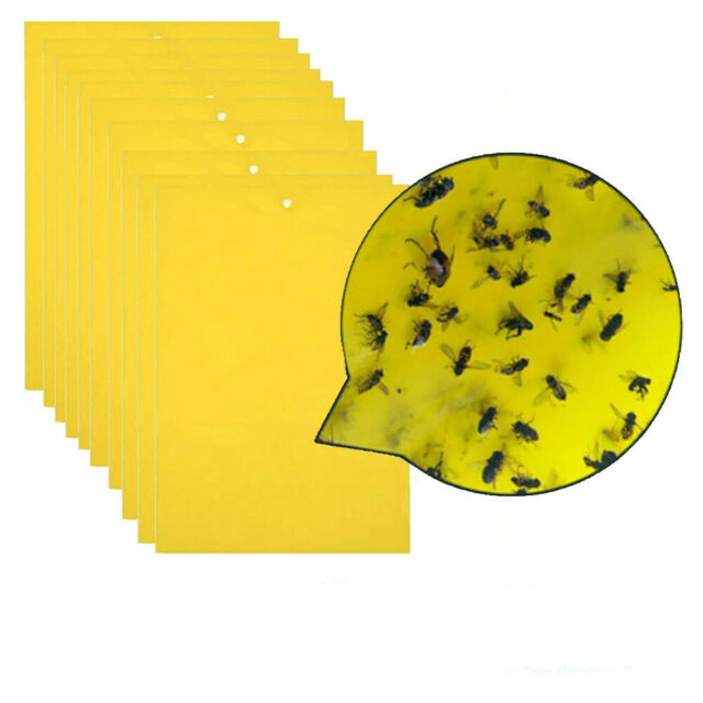 Terro Garbage Guard Insect Killer Case Pack Of 8 Ebay