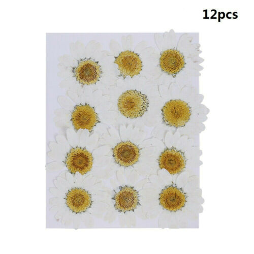 12pcs Pressed Flower Dried Daisy Flowers For Art Crafts Resin DIY Jewelry Making