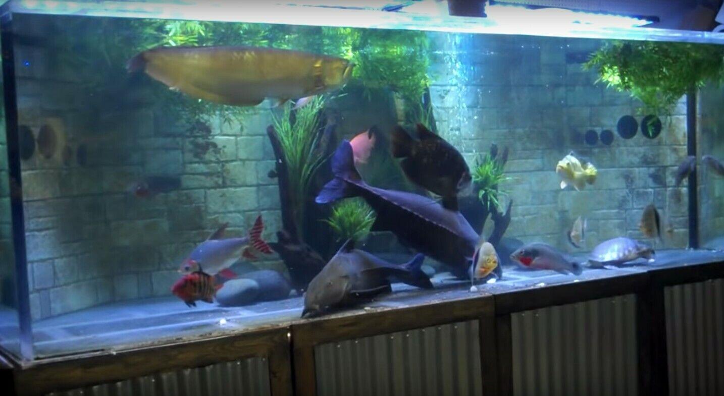 1100 Gallon Acrylic Aquarium Complete