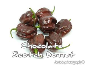 Super-Hot Scotch Bonnet 25 Orange Premium Pepper Seeds-T 64