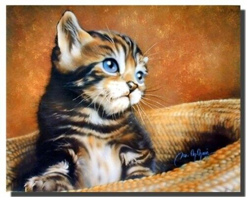 Cute Cat with Blue Eyes Kids Room Animal Picture Wall Decor Art Print 16x20