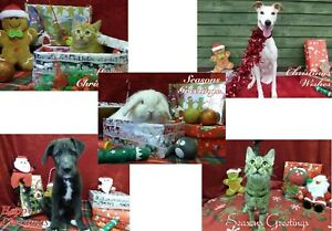 Animal-Care-pack-of-5-Christmas-cards