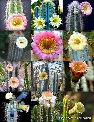FLOWERING PILOSOCEREUS variety mix rare columnar cacti exotic seed 20 seeds