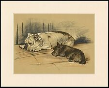 BRITISH BULLDOG AND SCOTTISH TERRIER LOVELY DOG PRINT MOUNTED READY TO FRAME