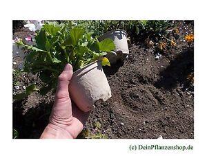 Anzuchttoepfe-Pflanztoepfe-Biopacks-biologisch-abbaubare-Toepfe-Anzuchtzubehoer